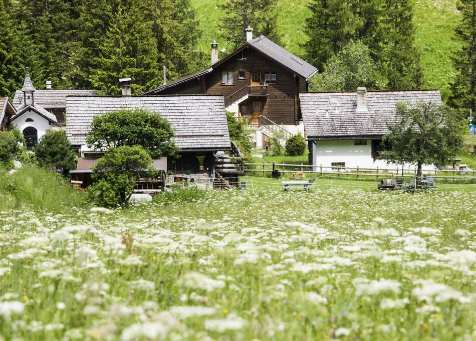 Flower meadows surround Chalet Edelweiss